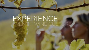 Experience French Wine Culture With Taste Du Languedoc Wine Tours.