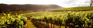 Limoux vineyards