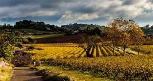 St Chinian Vineyard
